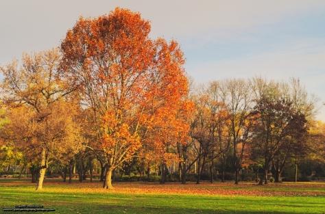 Jesień w budapesztańskim parku - Városliget