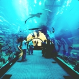 Tunel pod akwarium w Dubaju